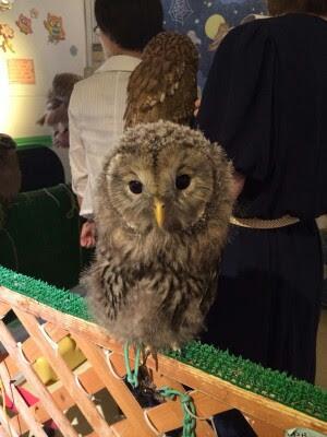 owl cafe5