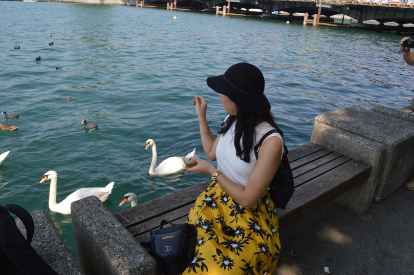 Feeding swans in Bellevue Platz